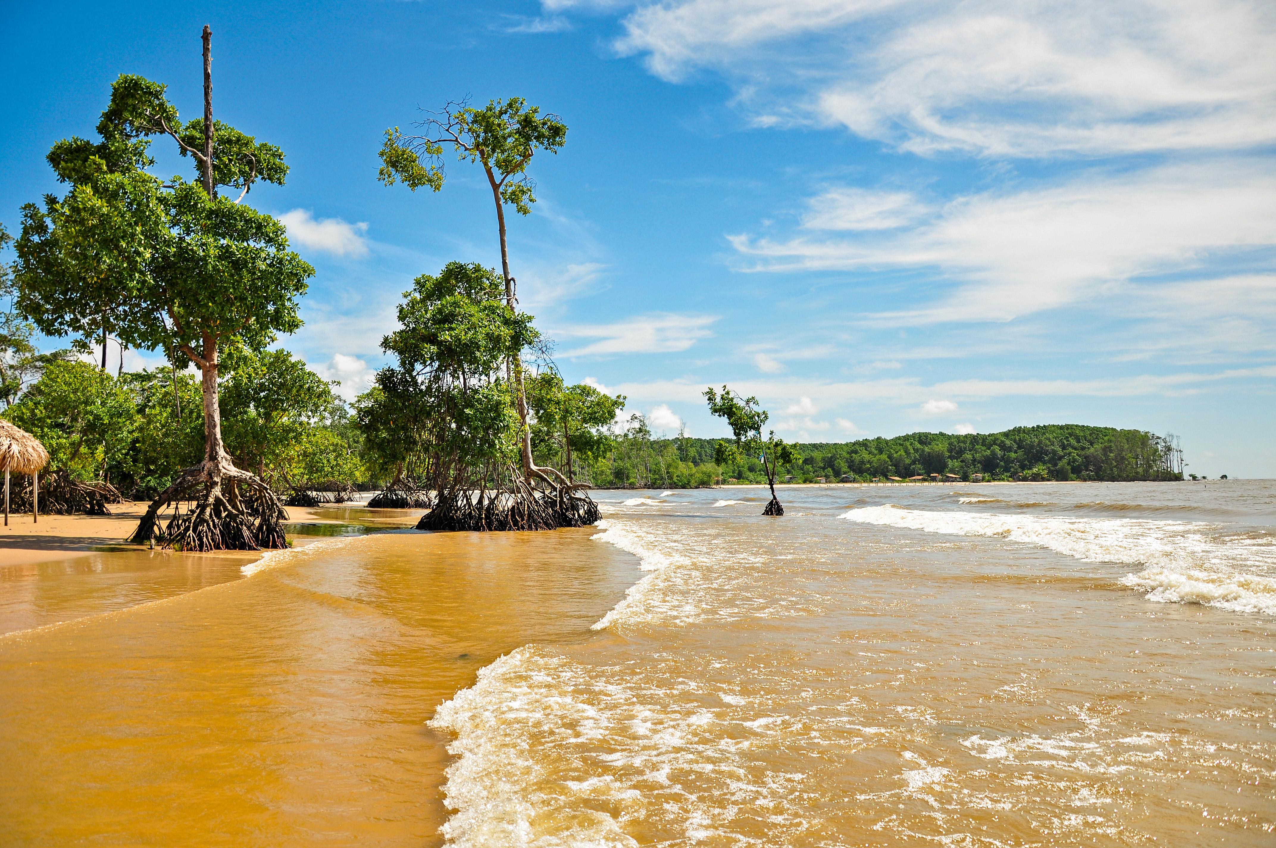 Praia vazia com árvores cujas raízes emergem da terra