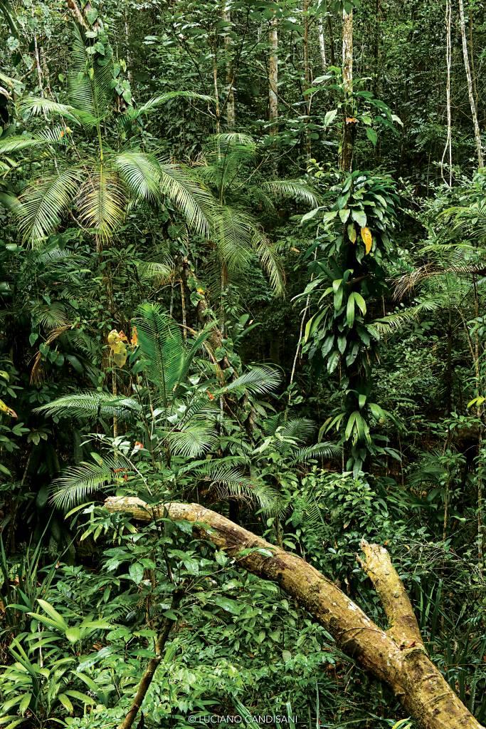 Vista da mata fechada, com cerca de vinte tipos diferentes de plantas