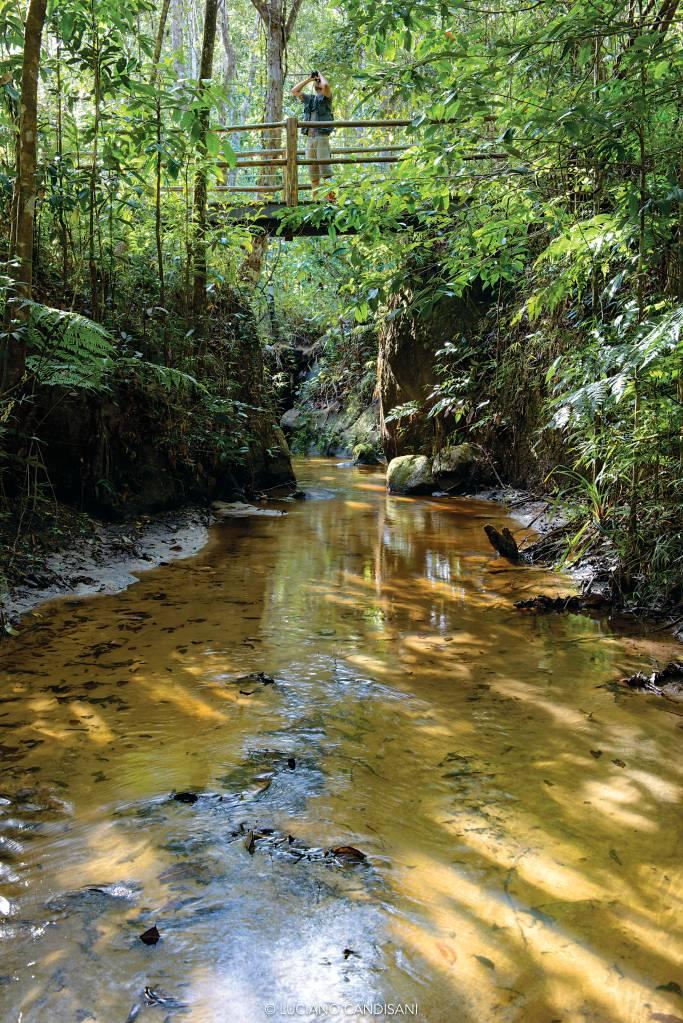 Curso do rio em meio à floresta. O rio está em nível bem mais baixo que o chão e as árvores, e há um homem fotografando do alto de uma ponte