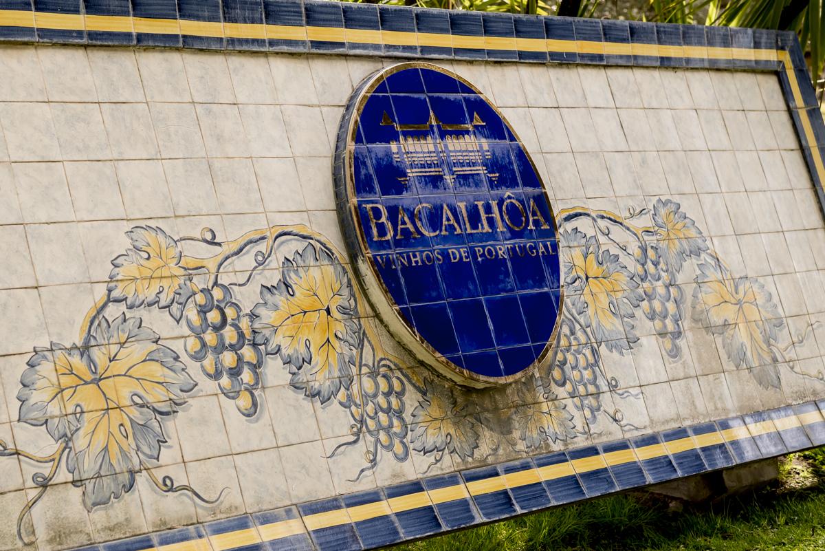 A chegada à Quinta da Bacalhôa: vinho e arte