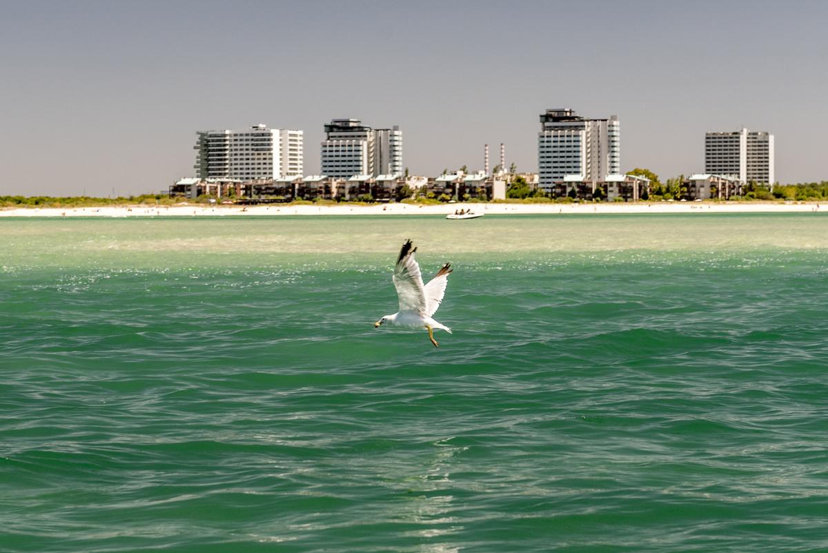 Uma gaivota e, ao fundo, o balneário de Troia: ponto de vista privilegiado