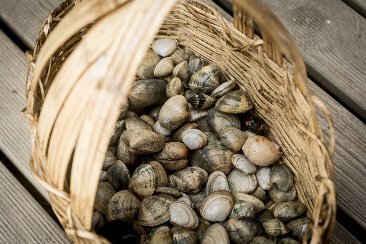 Amêijoas fresquinhas vendidas pelos pescadores na praia