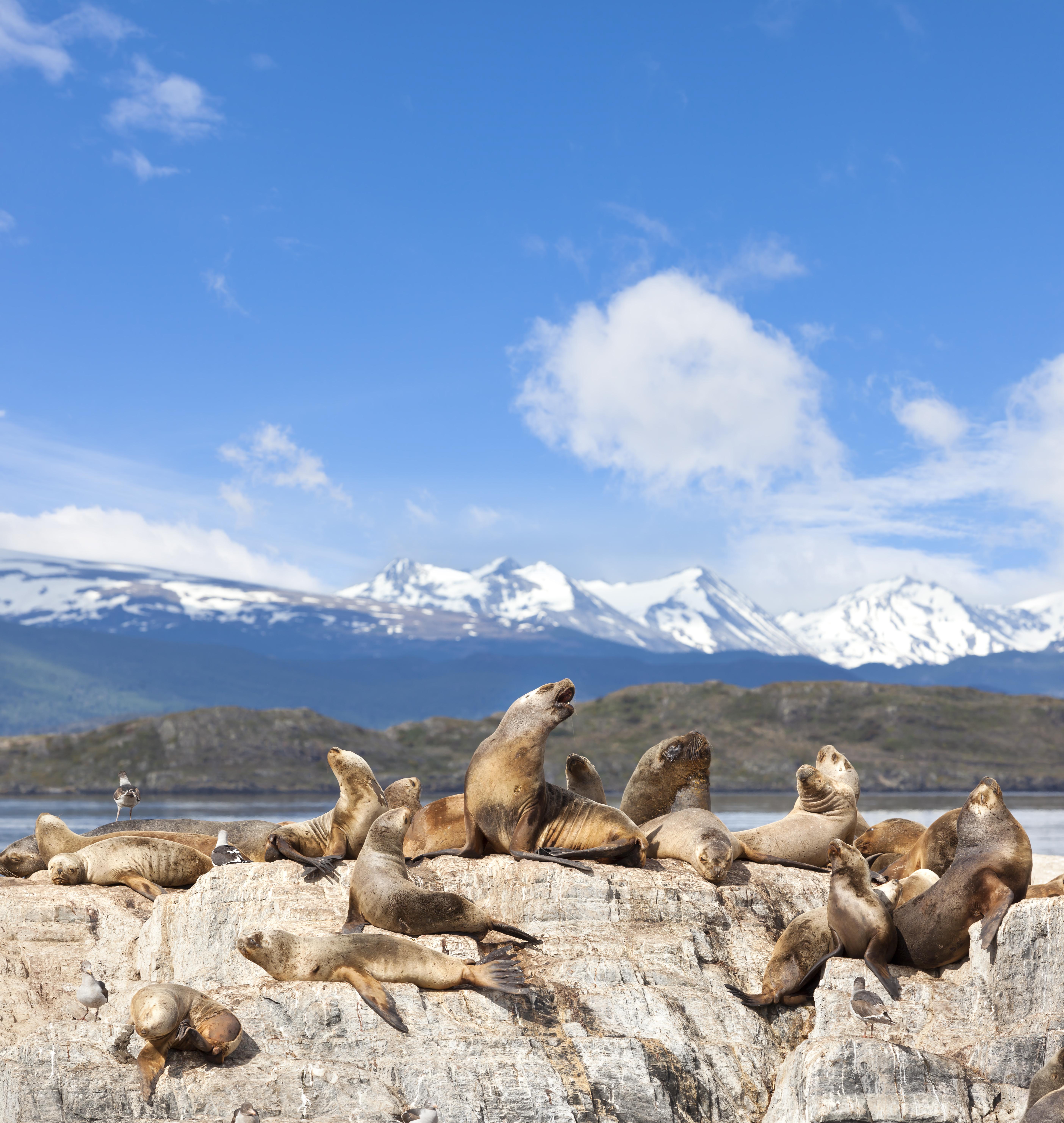 Leões-marinhos curtindo uma vibe em território que é só deles, no Canal de Beagle.