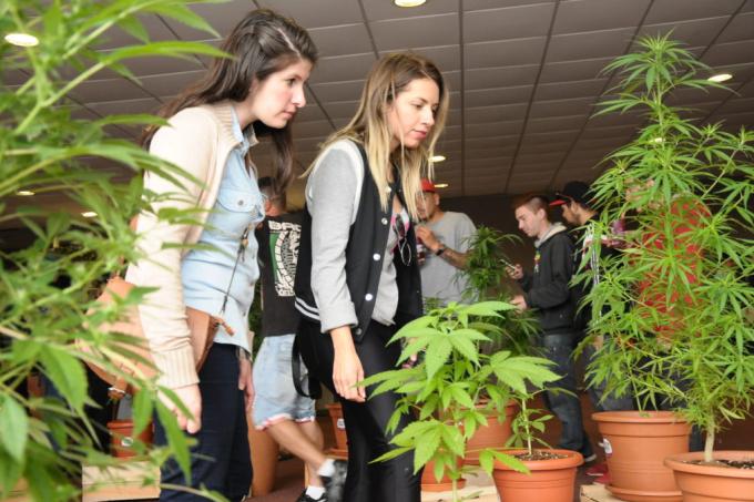 Expo Cannabis 2015