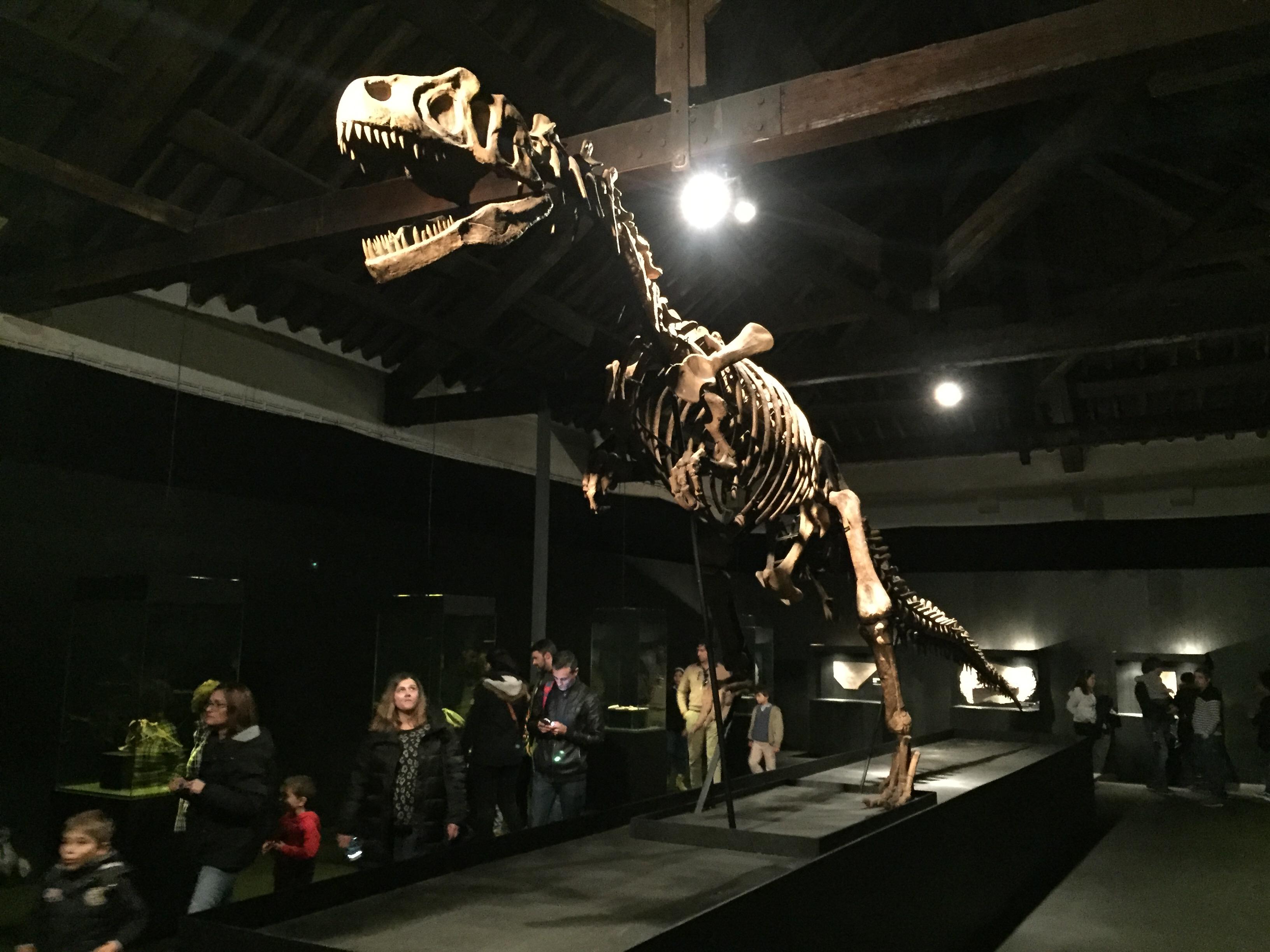 Réplica do esqueleto de um T-Rex: o queridinho dos gigantes