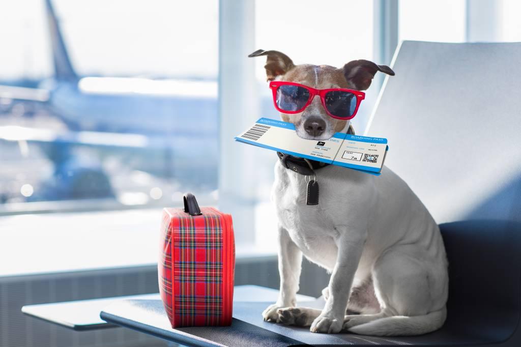 Cachorro no aeroporto