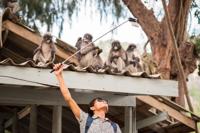 Garoto faz selfie com macacos na Tailândia