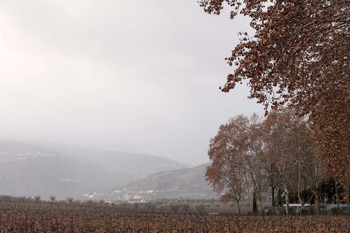 Os vinhedos da quinta: poéticos até no inverno