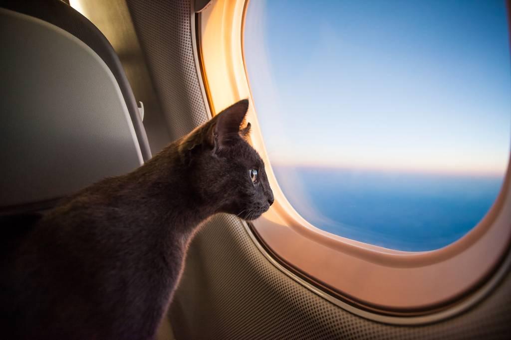 Gato voando de avião