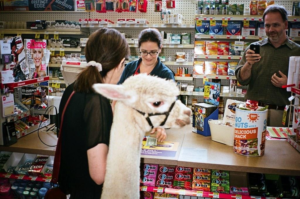Alpaca em farmácia