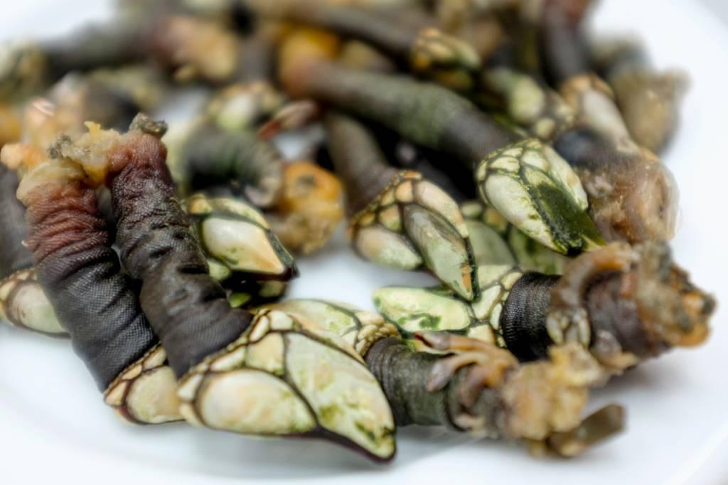 Os esquisitões (e deliciosos) percebes: gosto de maresia