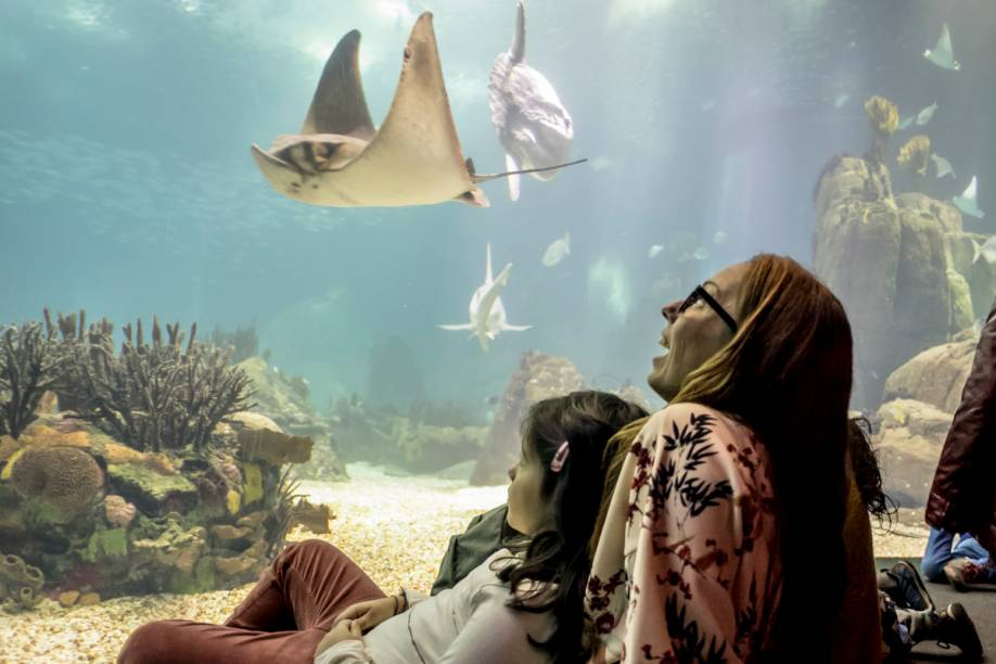 O Oceanário de Lisboa reúne mais de 8 mil animais de 500 espécies. Tubarões, arraias e o exótico peixe-lua são as atrações do tanque principal