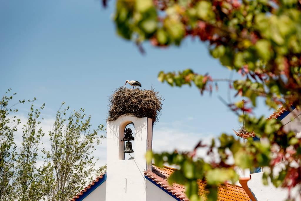 Cegonha na torre da igrejinha: ilustres visitantes sazonais