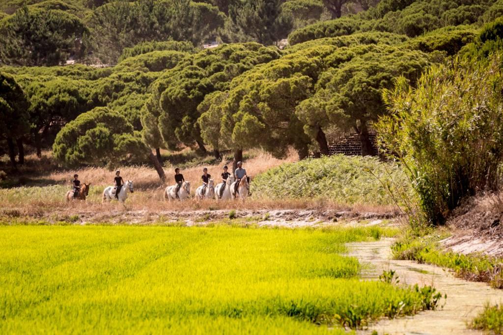 No meio do caminho tinha um arrozal