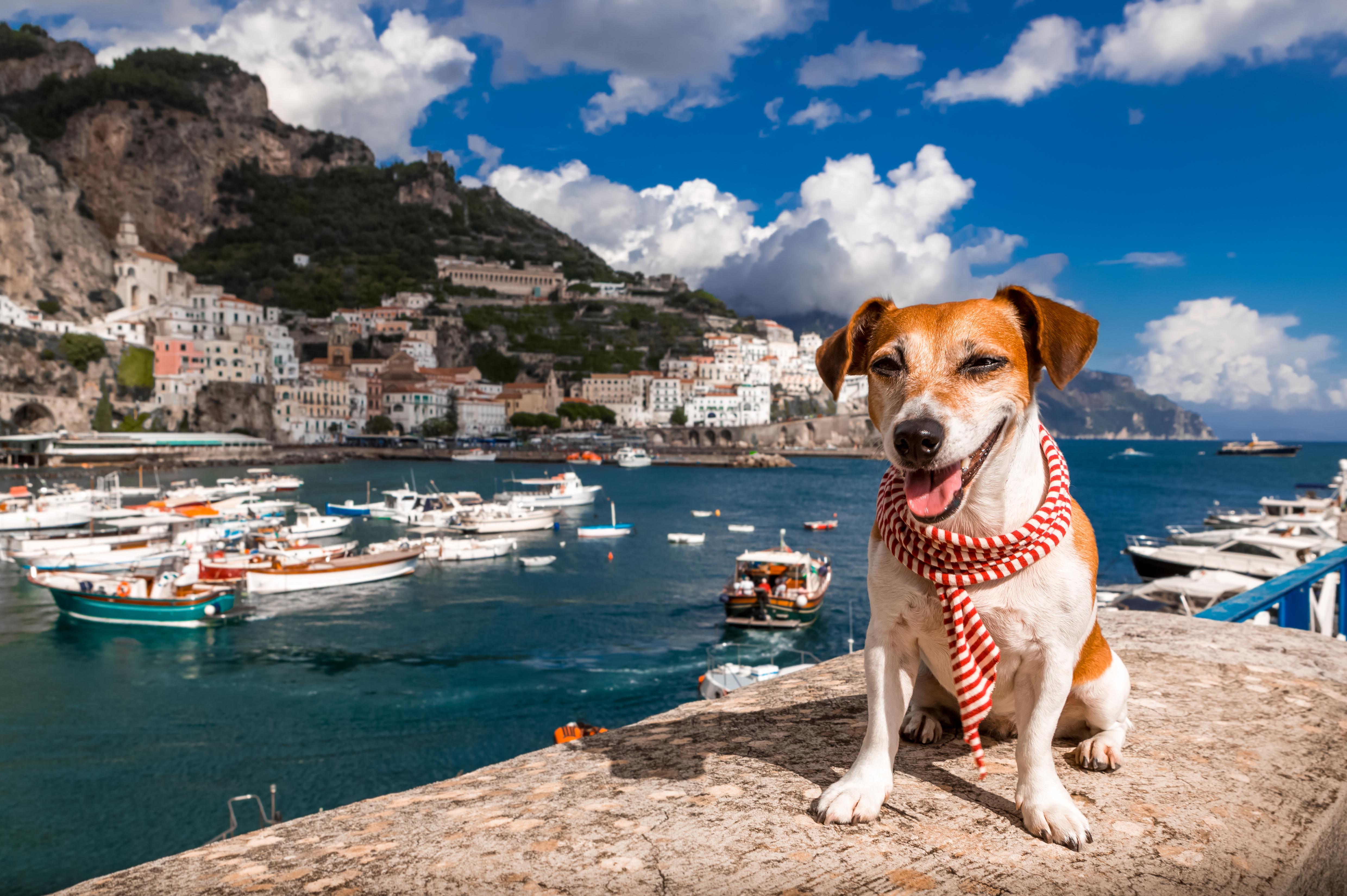 Cachorro viajando na Itália