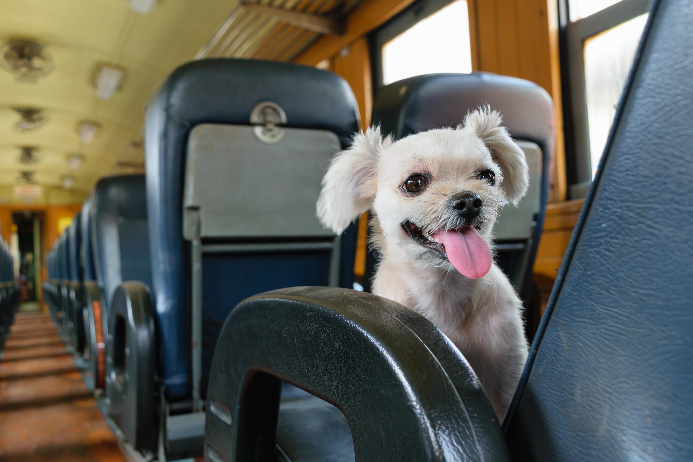 Cachorro de trem