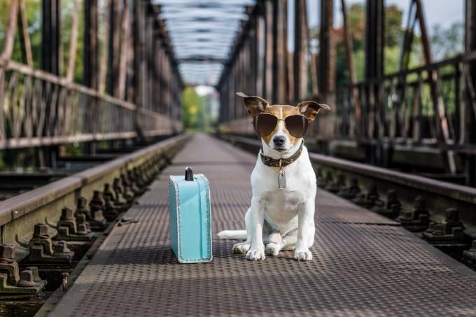 Viagem com animais: cachorro com mala