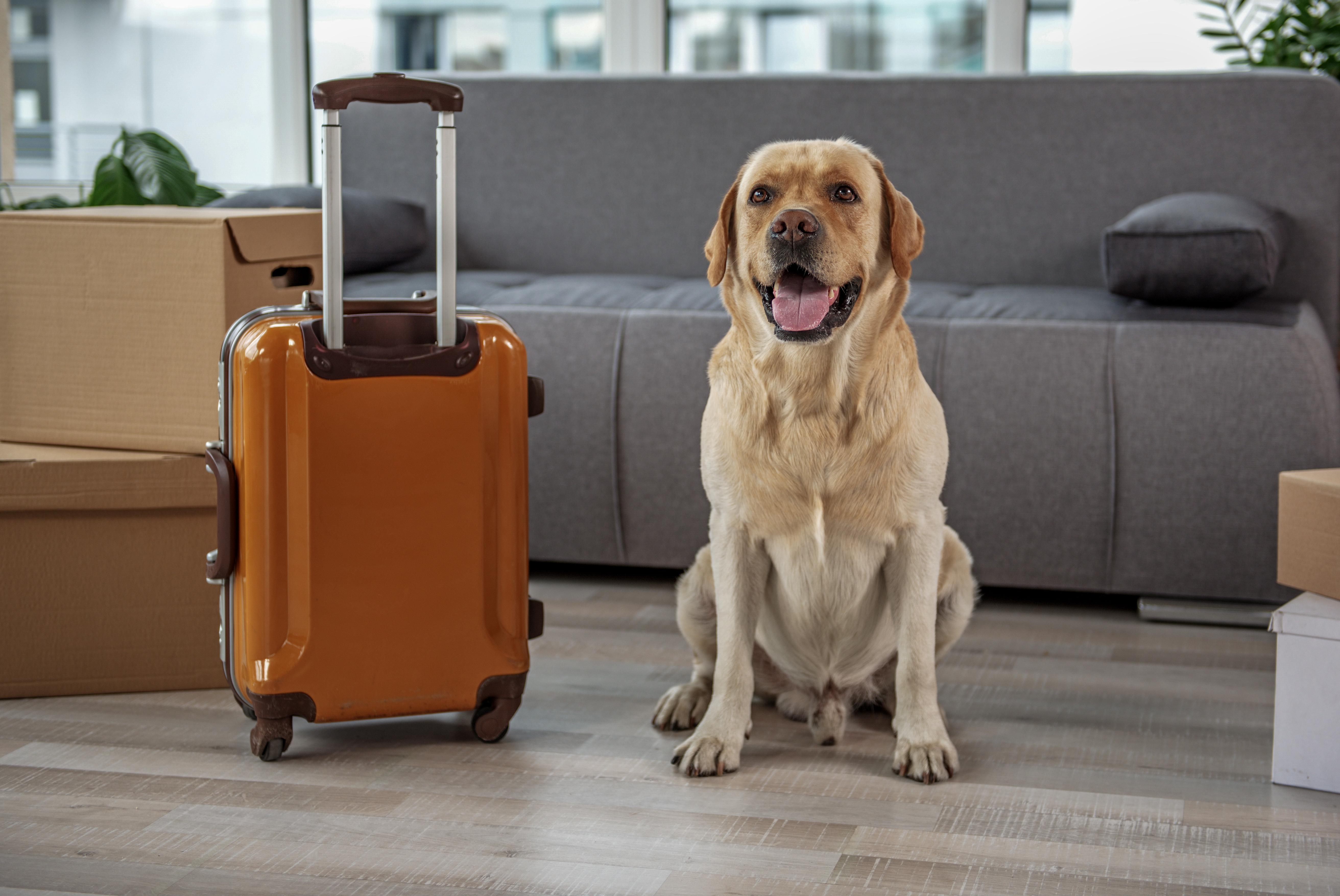 Cachorro ao lado de bagagem - viagem com animais
