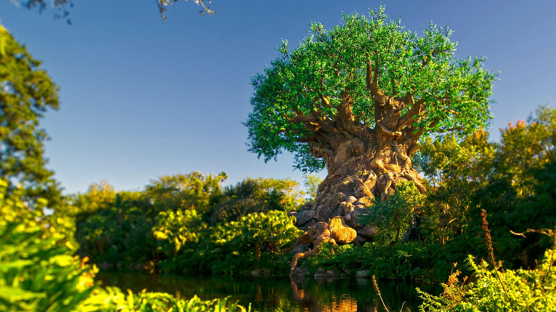 Baobá, árvore-símbolo do Animal Kingdom