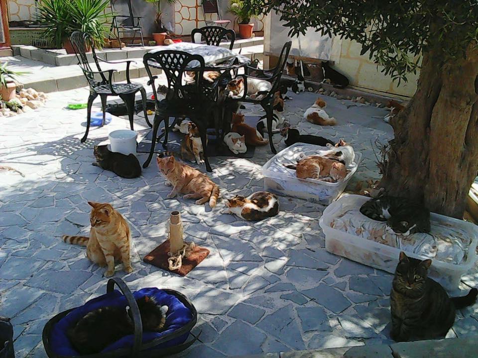 O Tala Monastery Cats é uma associação voluntária que cuida de gatos abandonados