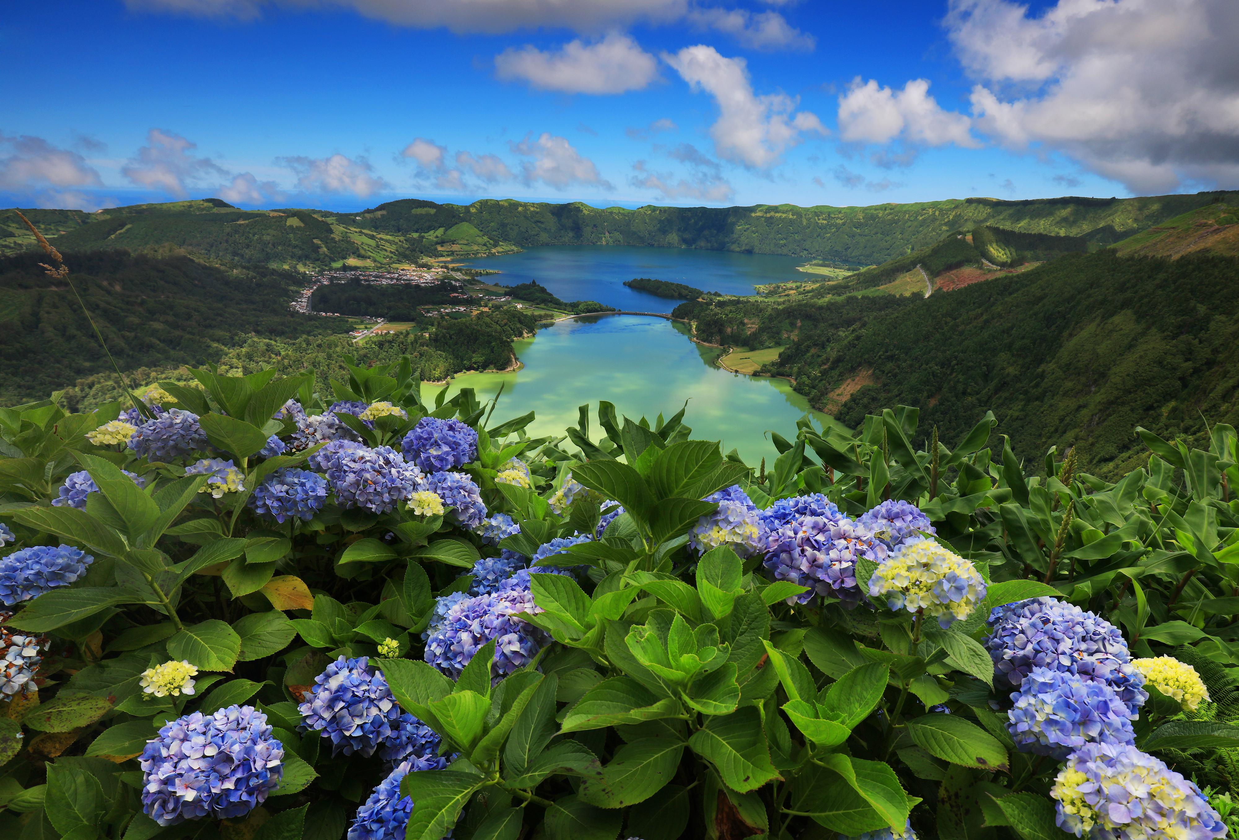 Hortênsias florescendo no Lago dos Açores
