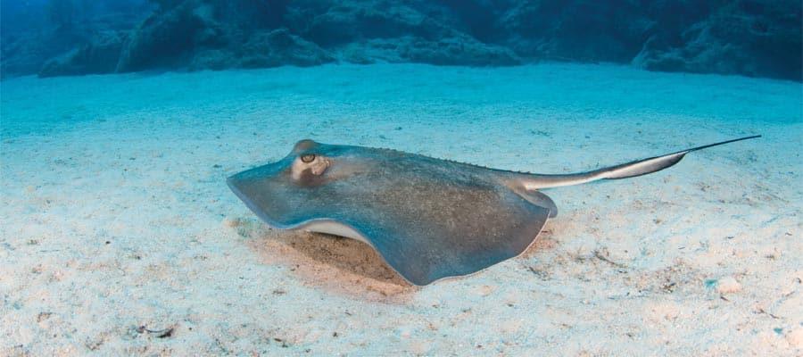 Arraia na Great Stirrup Cay, ilha da Norwegian Cruise Line nas Bahamas