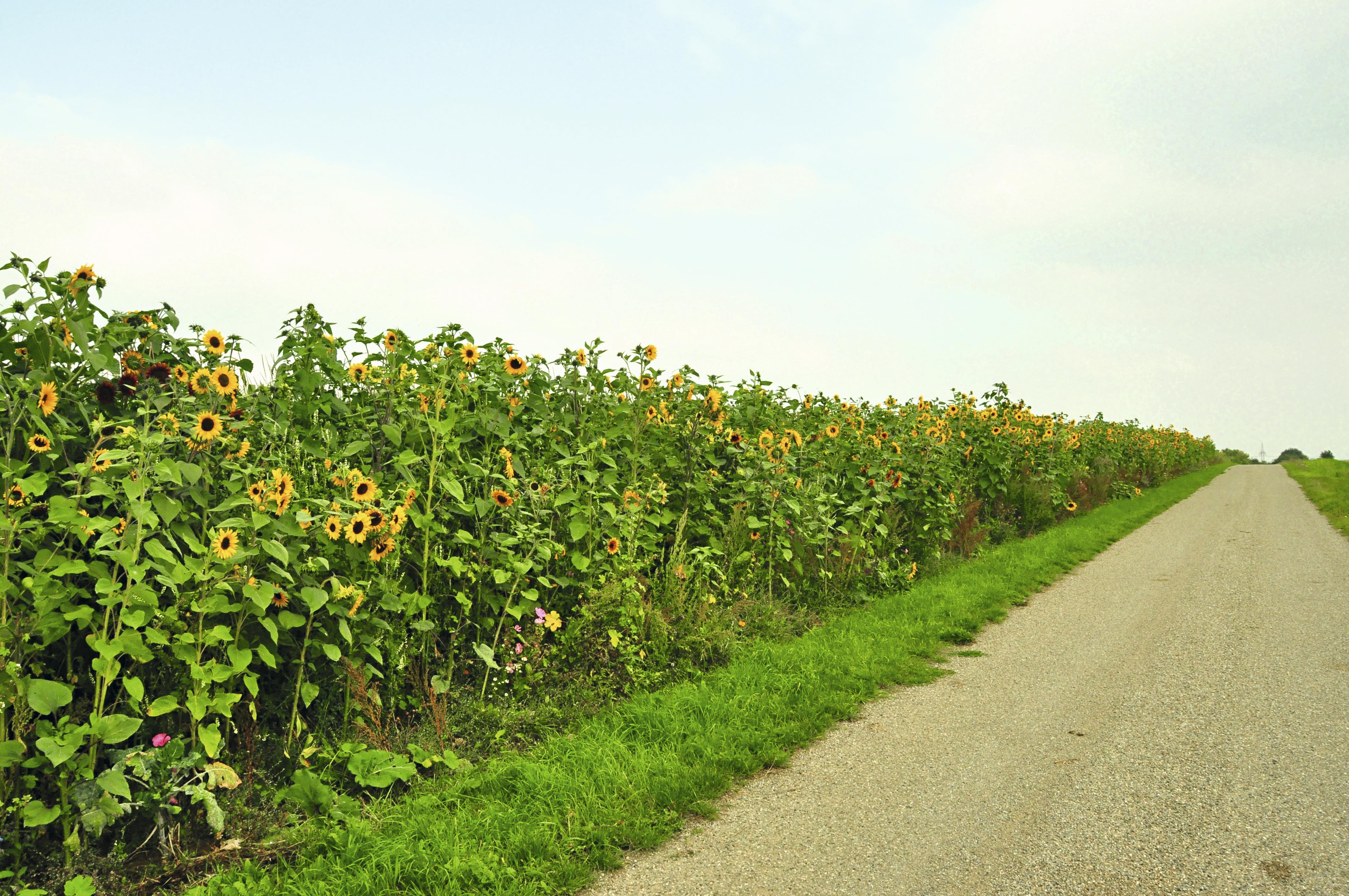Estrada da Rota Romântica, Alemanha