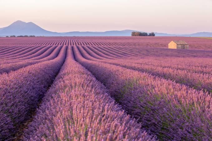 Amanhecer em um campo de lavanda próximo a Valensole, na Provence