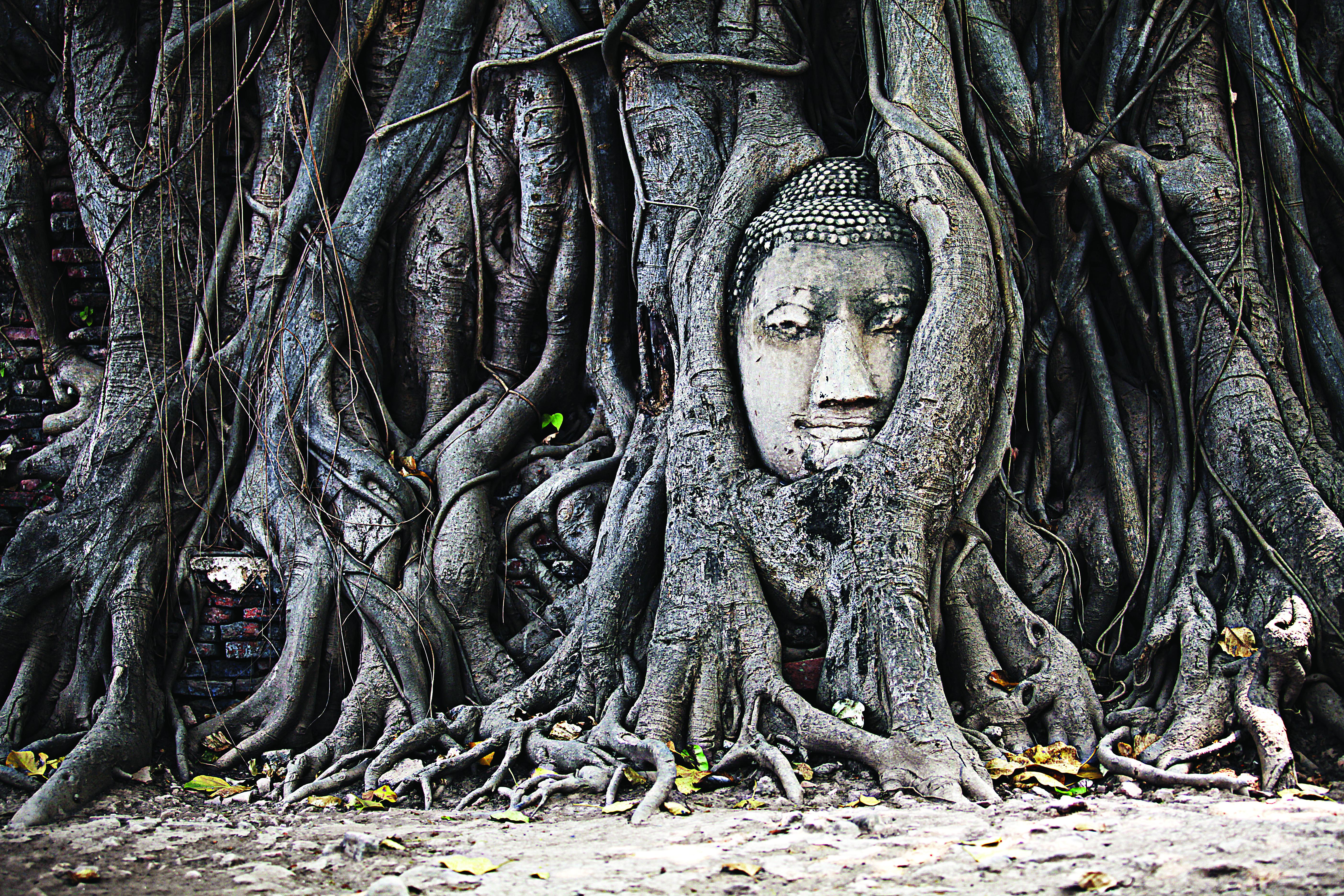Imagem engolida por raízes em um templo da antiga Ayutthaya