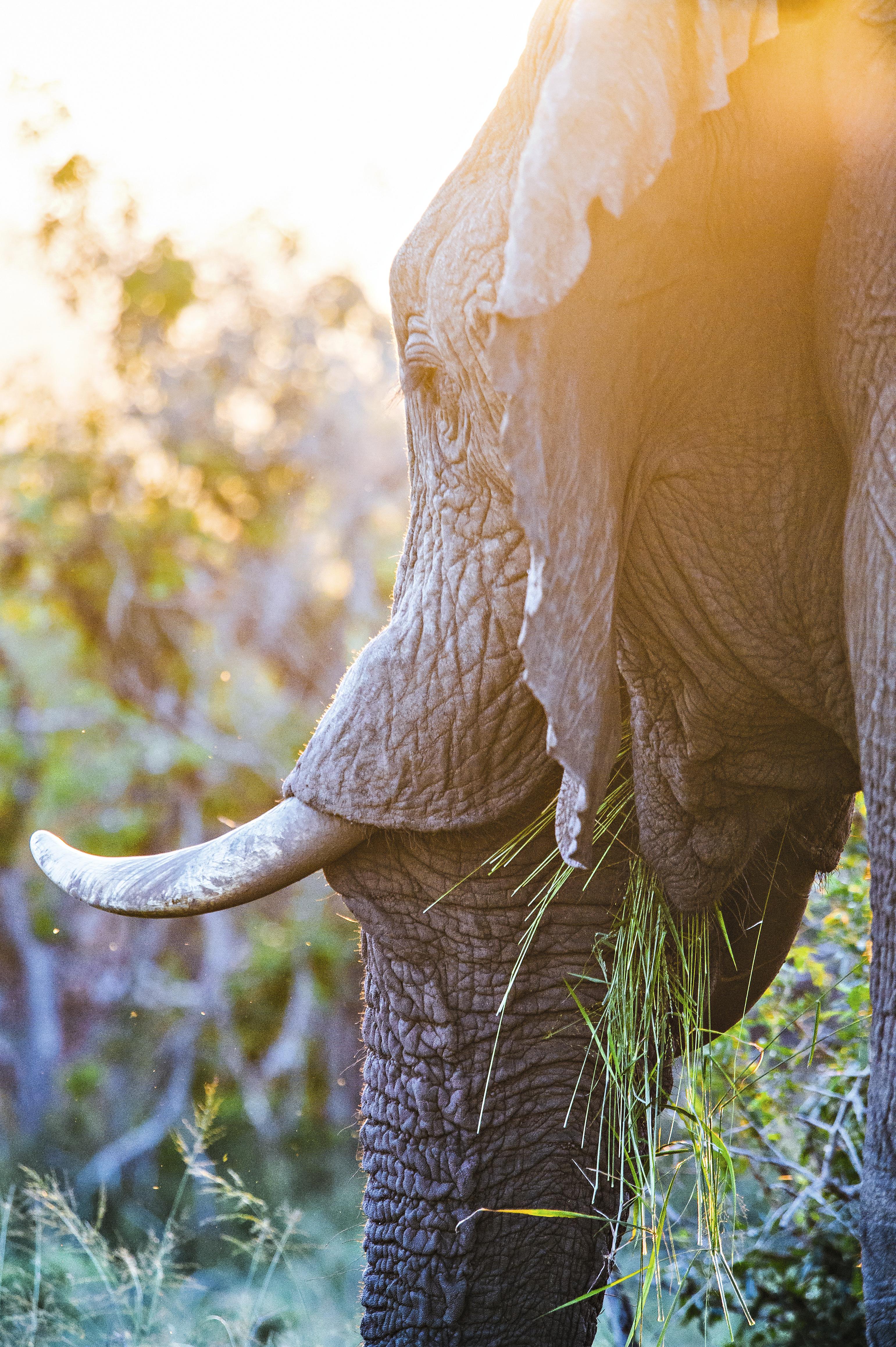 Elefante no Addo Elephant Park, África do Sul