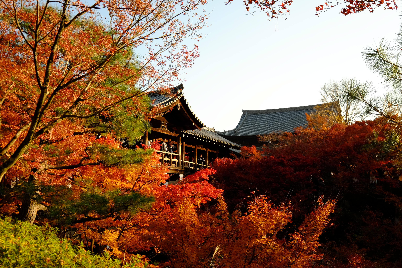 Templo de Tofuku-ji no outono é um dos mais bonitos de Kyoto. Crédito: