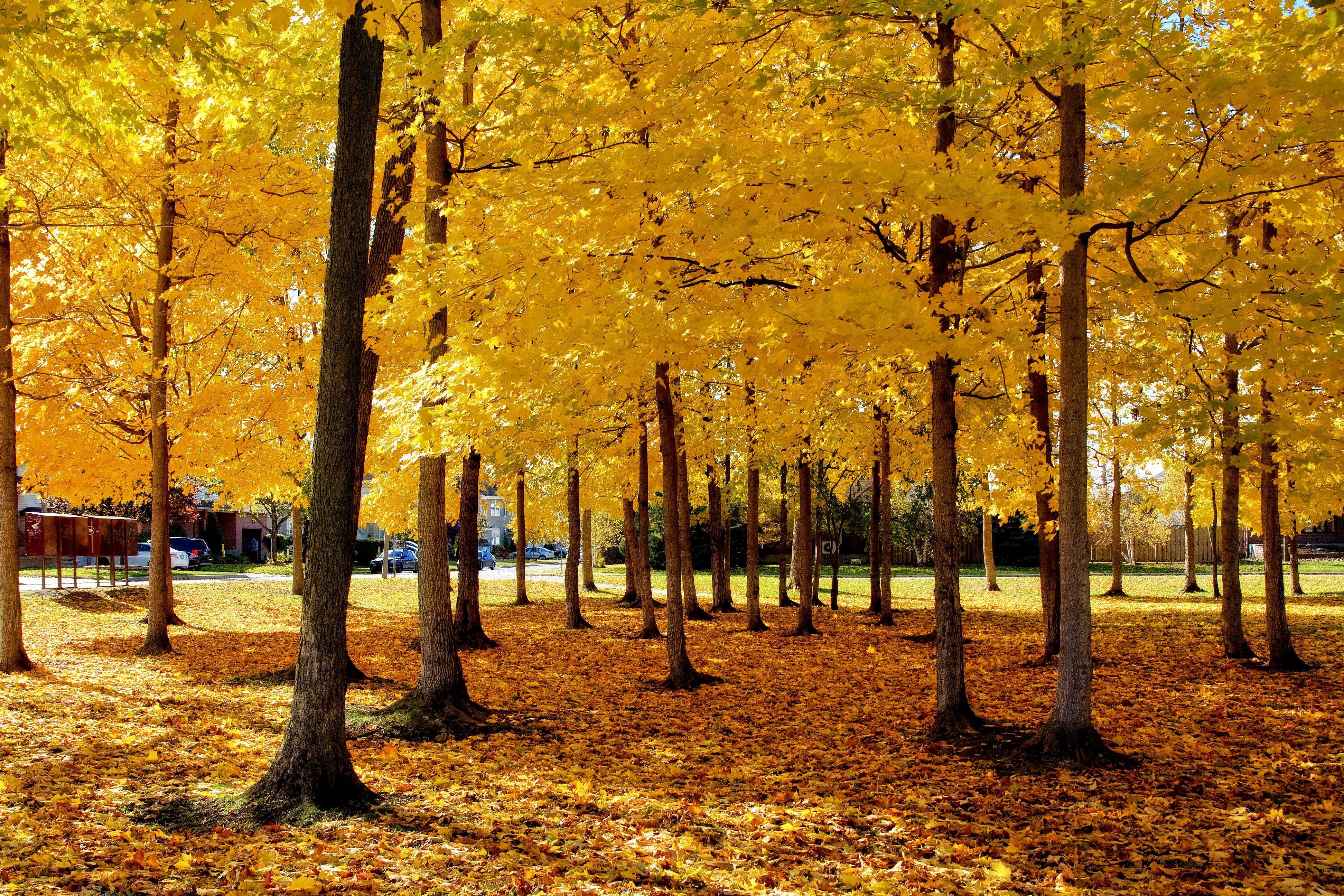 Outono é a época perfeita para visitar Montreal. Crédito: