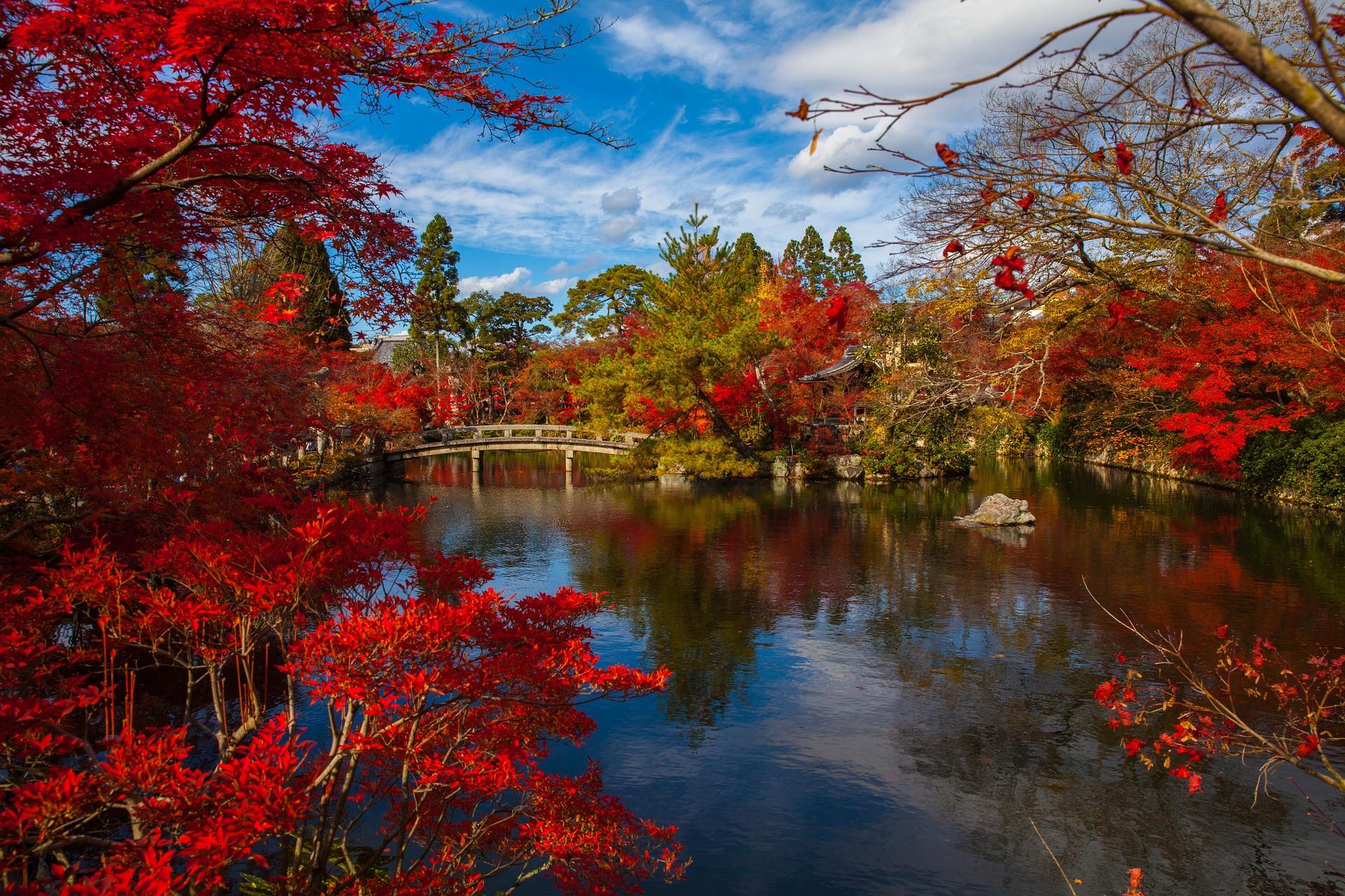 Nenhum outono é tão vermelho quanto o de Kyoto, no Japão. Crédito: