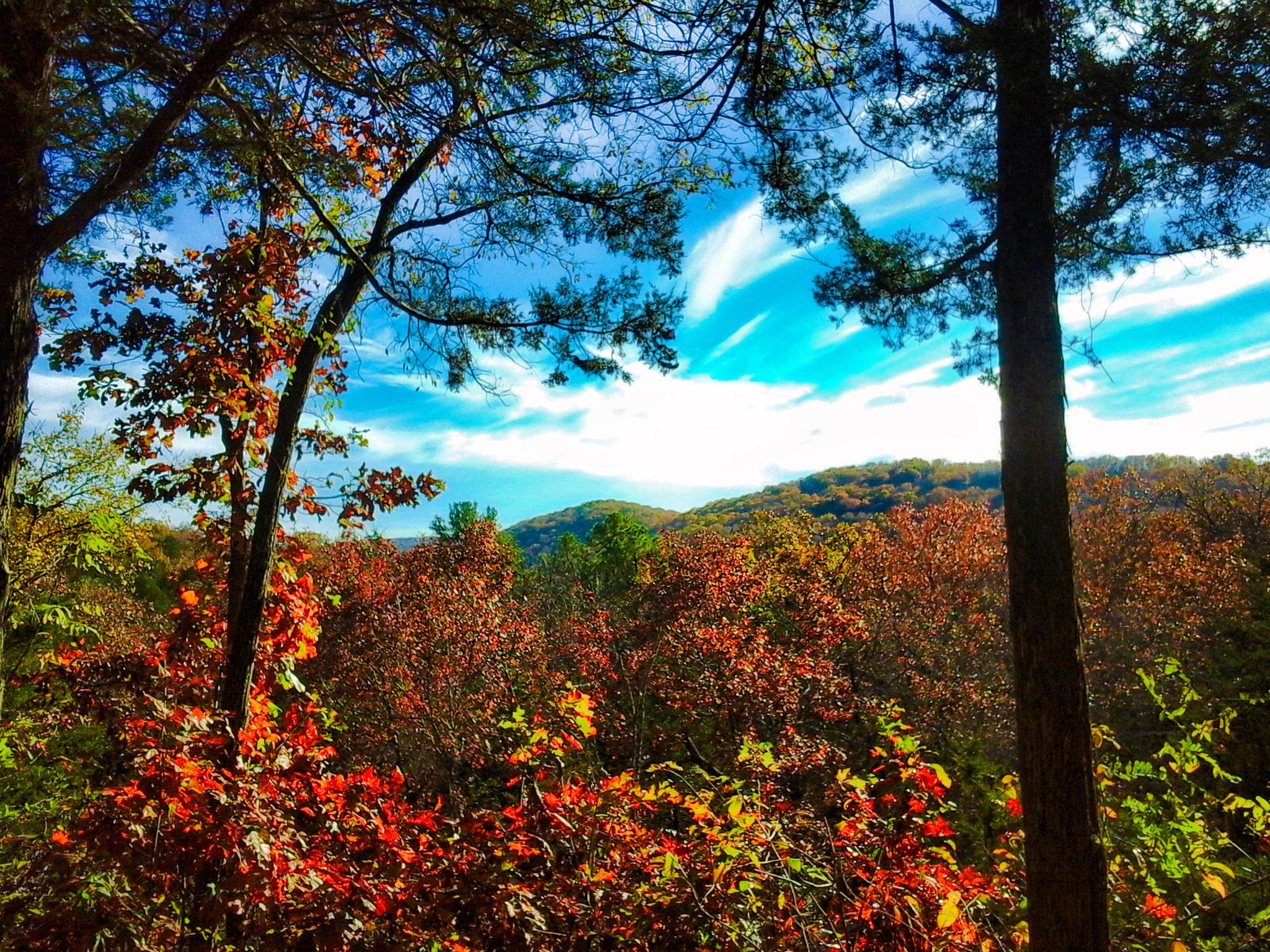 Ozark National Forest, no Arkansas. Crédito: