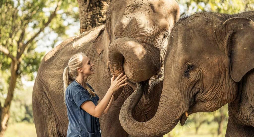 Anantara Gold Triangle Elephant Camp
