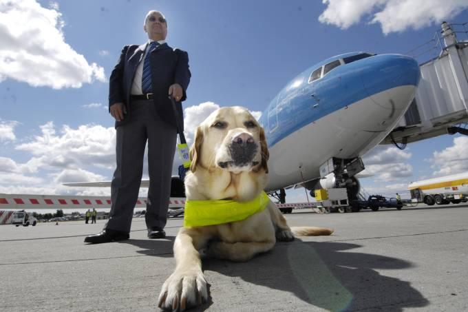 Cão-guia antes de entrar no avião
