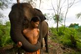 Elefante, Tailândia