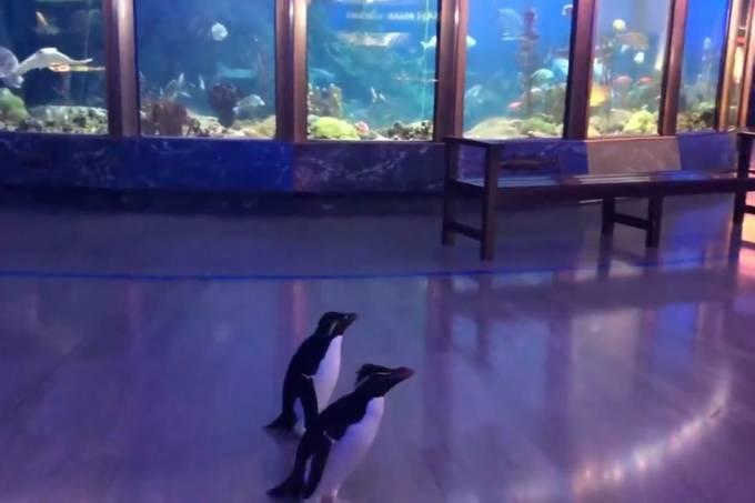 Shedd Aquarium, Chicago, Estados Unidos