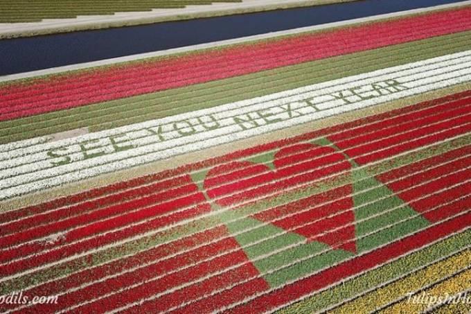 Mensagem em campo de tulipa na Holanda