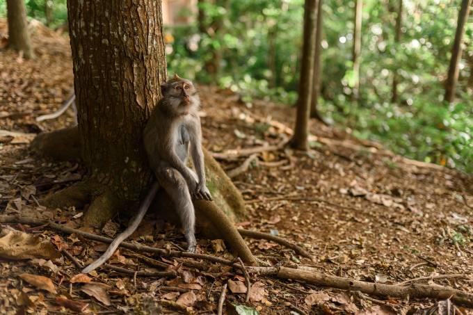monkey-4031425_1920