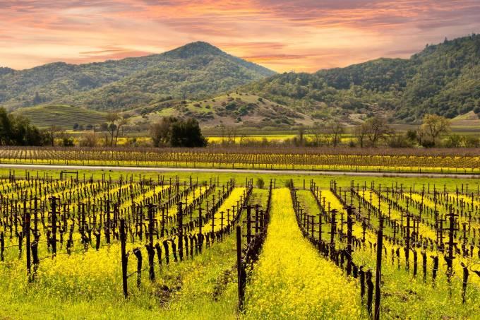 Napa Valley, Califórnia, Estados Unidos