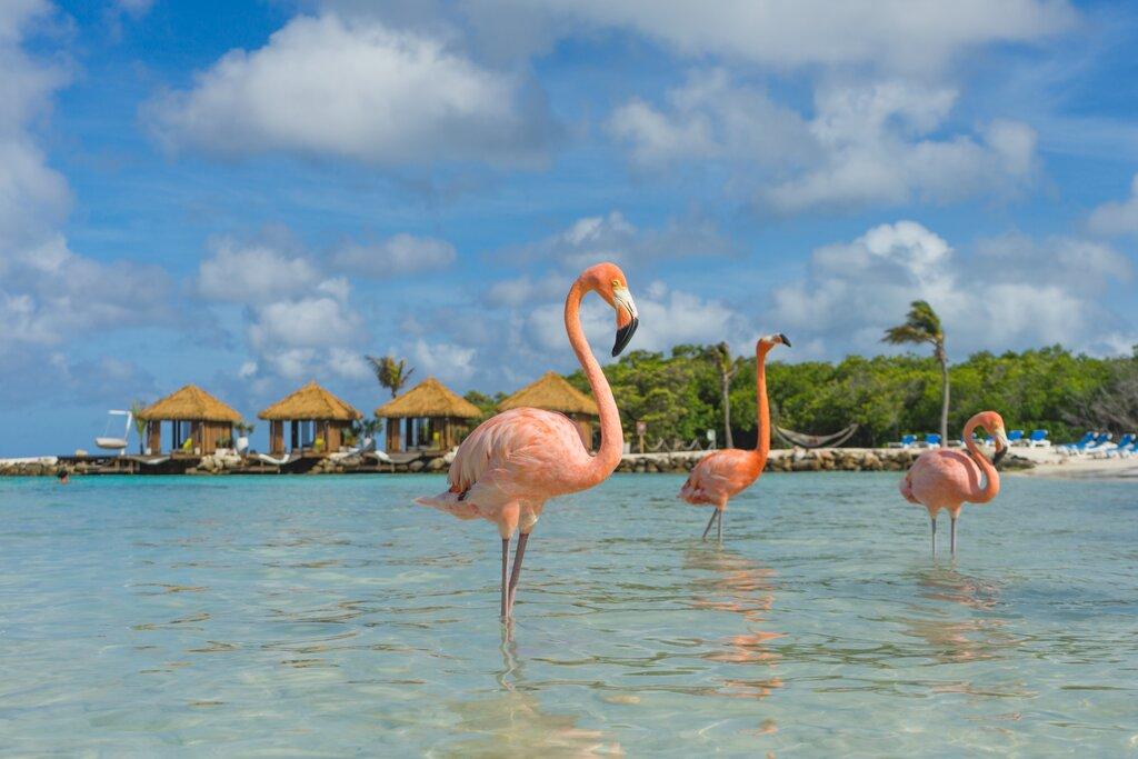 Flamingos, Renaissance Island, Aruba, Caribe