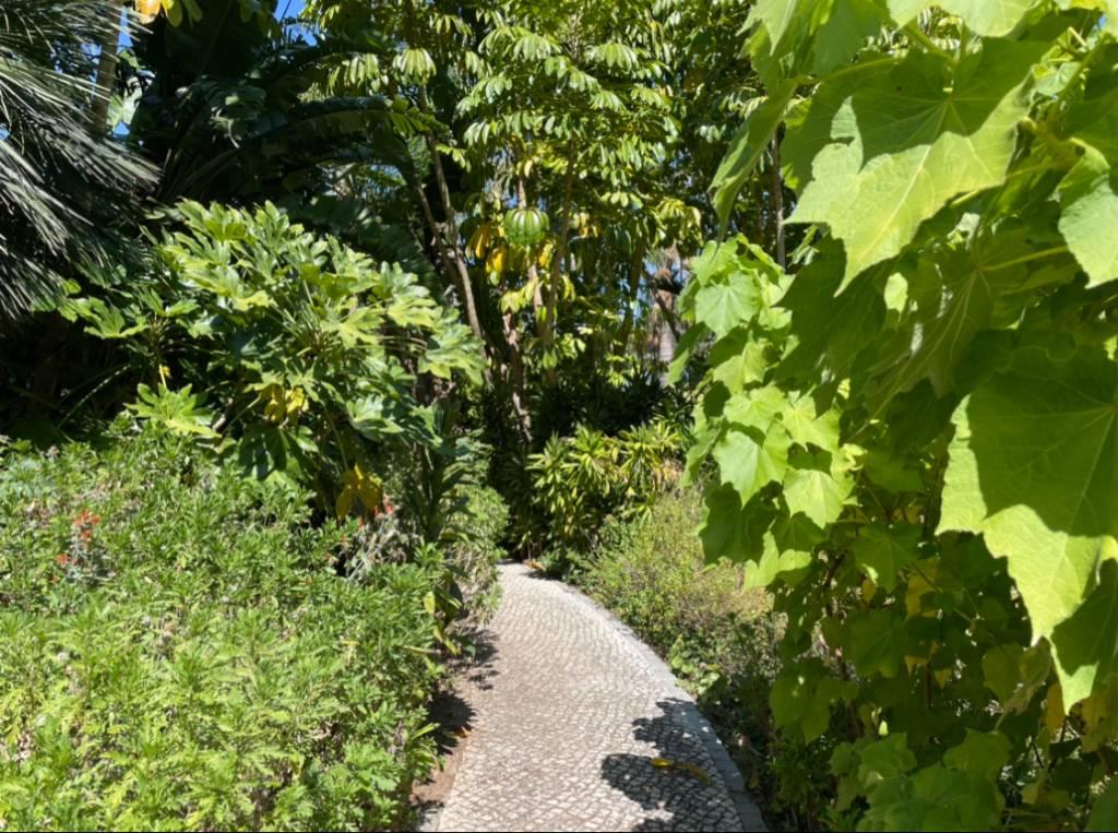 Caminho de pedras portuguesas entre plantas tropicais