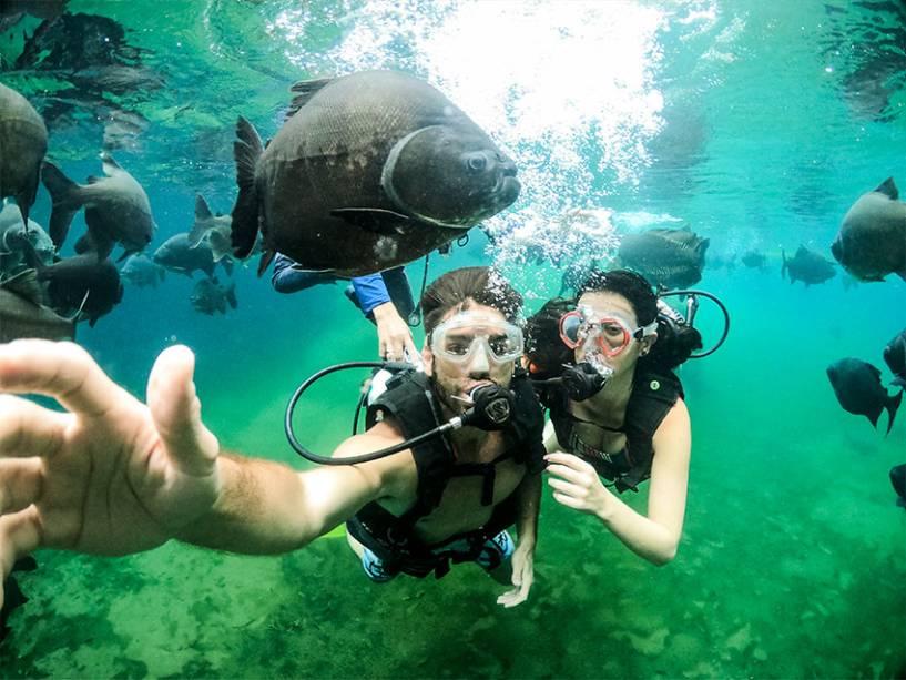 Também é possível fazer mergulho de cilindro no Lago das Águas Quentes, habitado por enormes pirarucus.