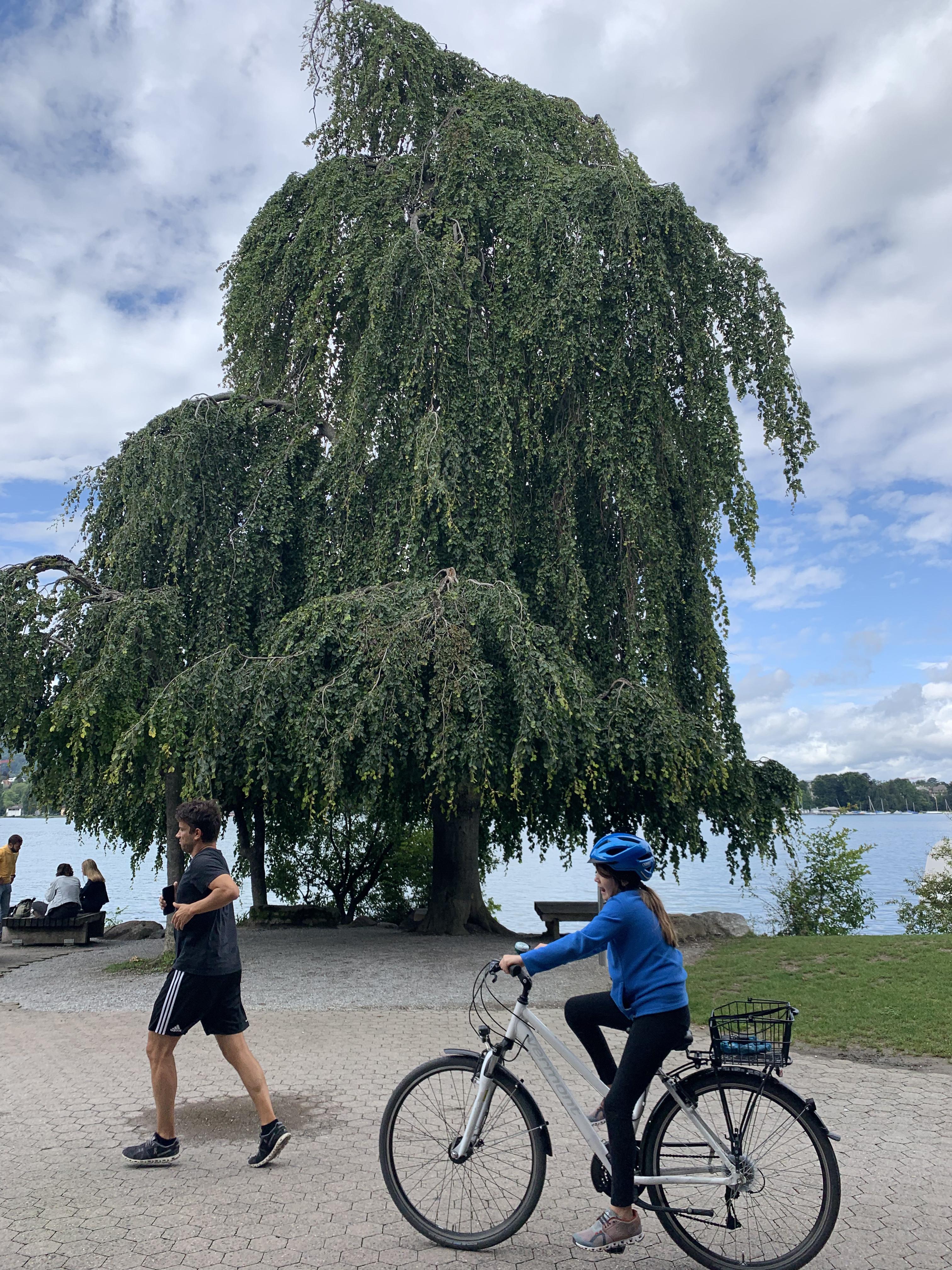 À beira do lago, as árvores dão um show à parte