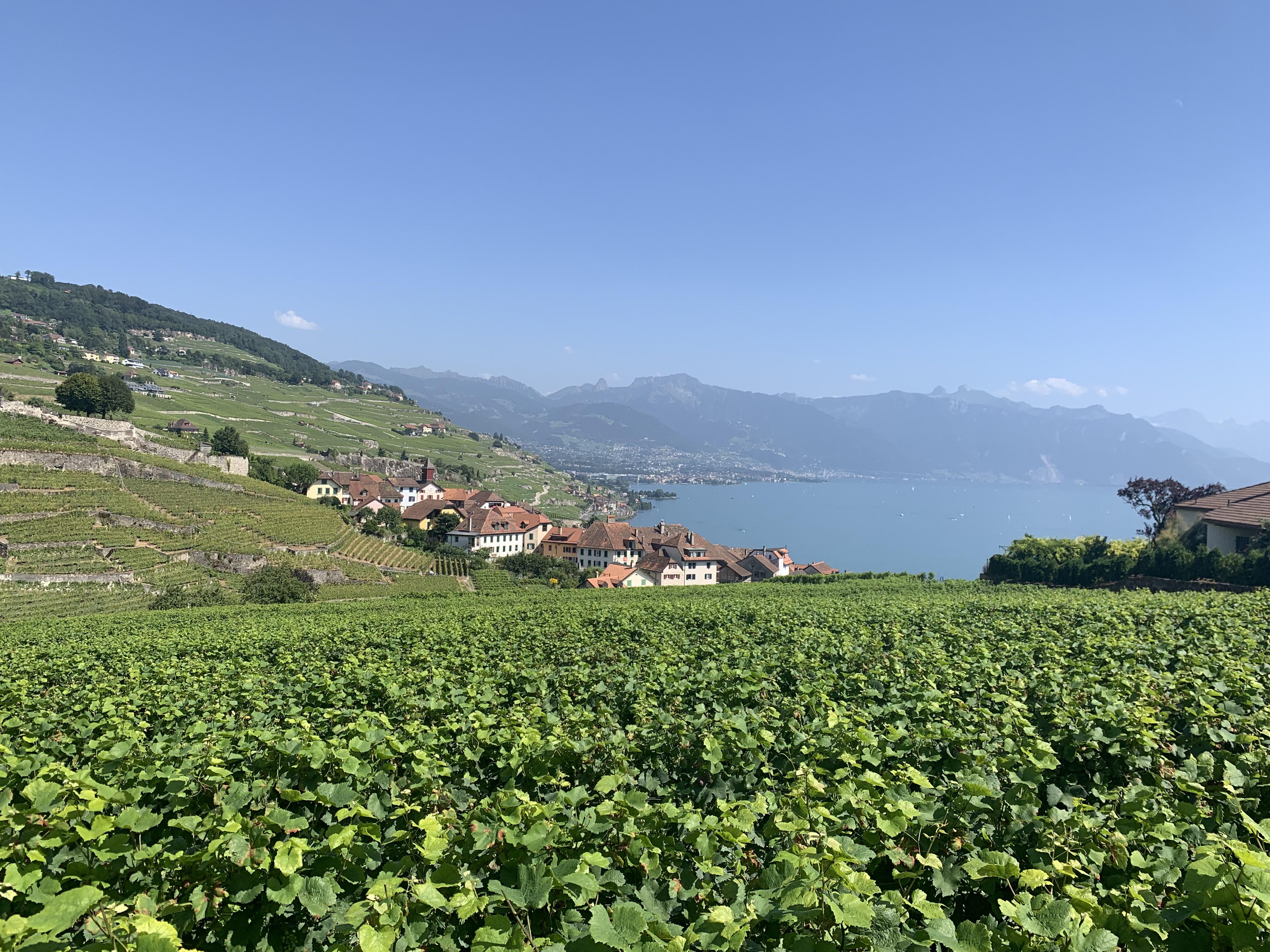 Vinhedos de Lavaux, considerada a região de vinhos mais bonita do mundo pela revista Forbes