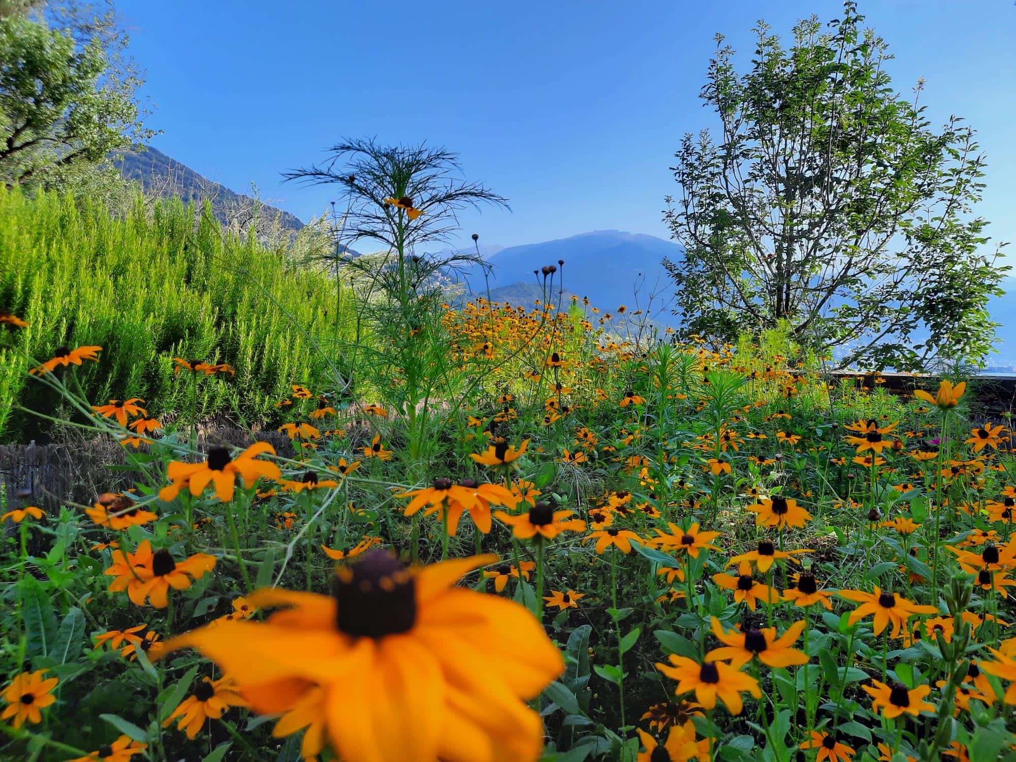 Flores, flores e mais flores colorem o jardim de Brissago.