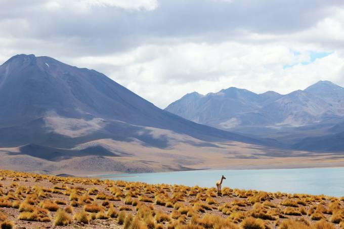 Reserva Nacional Los Flamencos, Atacama, Chile